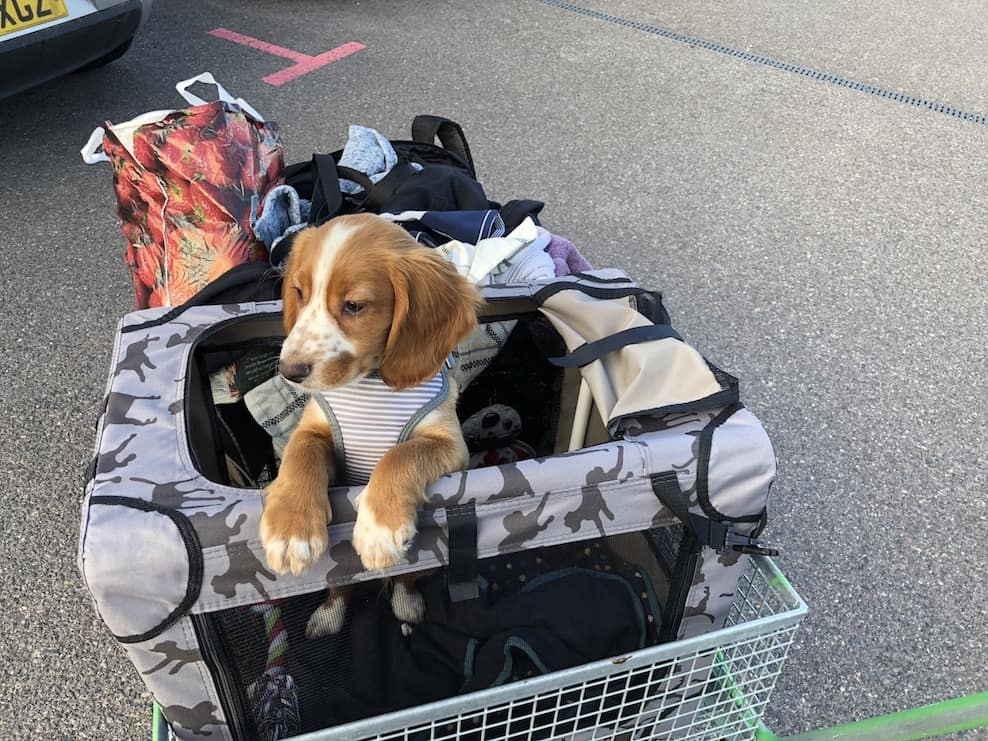 Our family now has an adventure puppy!! We're learning how to travel with a dog and find dog friendly places to visit on our road trips. #adventurepuppy #puppy #dogfriendly #travel #dog #adventure #roadtrip #motorhome