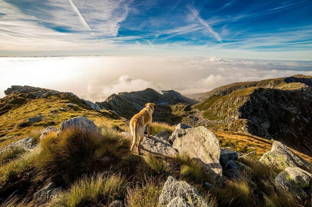 Travelling Europe with your dog- what do you need?