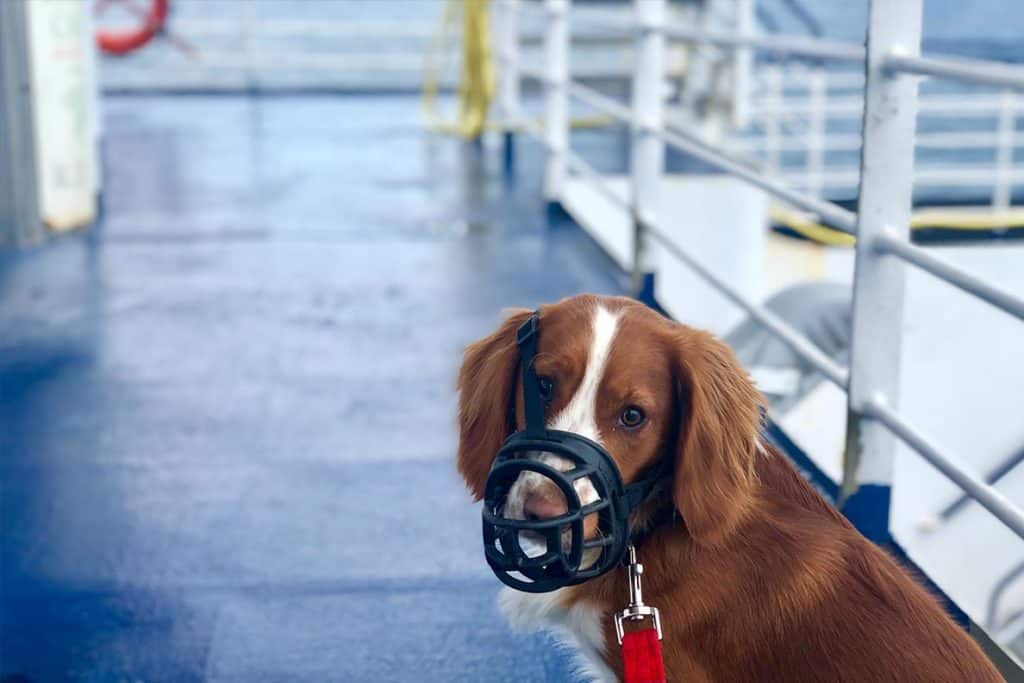 Don onboard Brittany Ferries with pet friendly cabin from UK to France