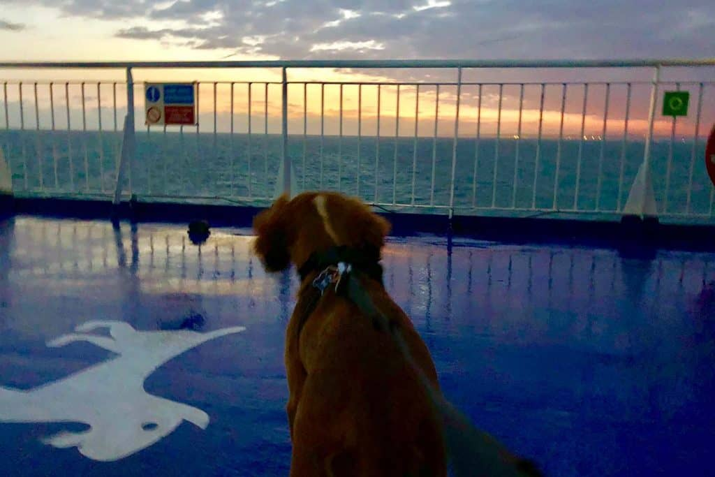 Travelling with a dog from UK to France by Ferry with a pet-friendly cabin.