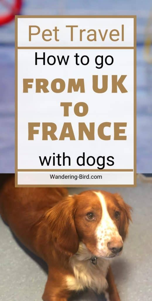 Enjoy travelling with your pet around Europe? Want to take your dog to UK or France? Here's how to get between the two without upsetting your pet. #pettravel #roadtriptips #UK