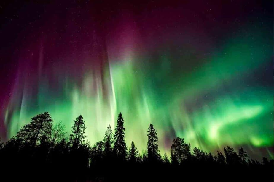 The pink and green hues of the Northern Lights above pine trees in Northern Europe.