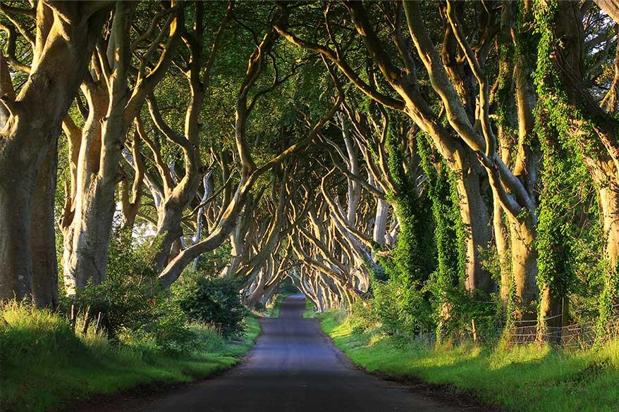 Idées et itinéraire pour un road trip en Irlande du Nord