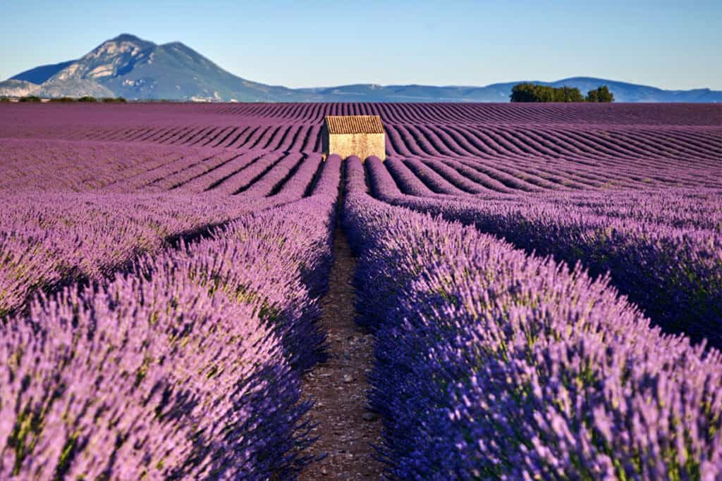 Best France road trip ideas and points of interest- Provence lavender fields