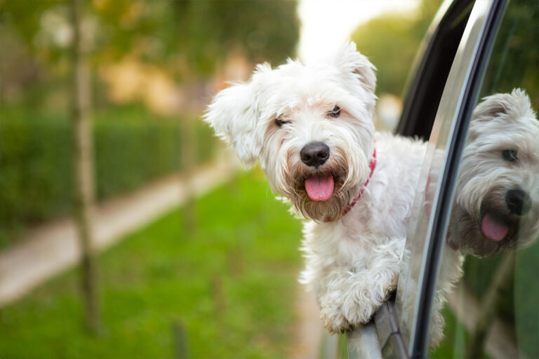 How to keep dog cool in car or motorhome during summer road trips or while travelling