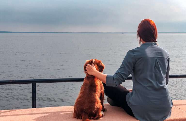 Taking dog UK to France or Europe after BREXIT 2021- rules on changes to pet passport UK scheme or Great Britain and Northern Ireland differences