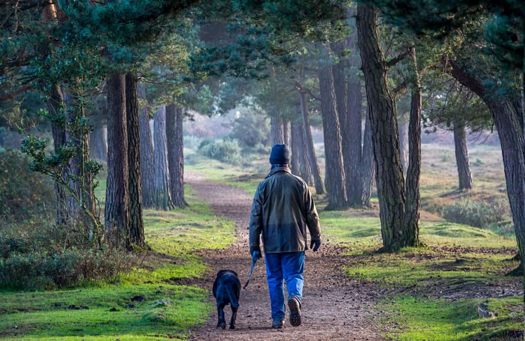Walking in the New Forest- one of the best places to visit in Hampshire and Dorset